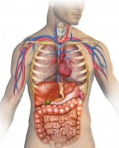 13870300-anatomy-of-the-human-body