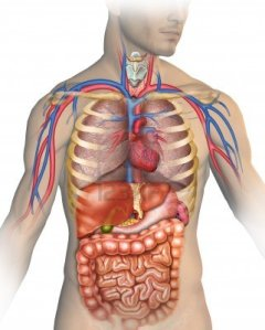 13870300-anatomy-of-the-human-body