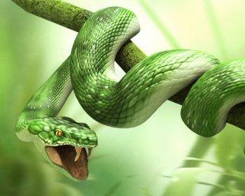 3d_animals_-_snake